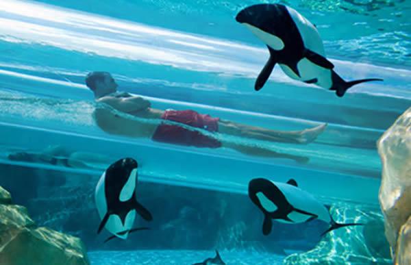 O Dolphin Plunge no Aquática