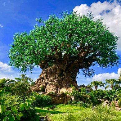 Disney Point Roteiro Completo Gratis Animal Kingdom