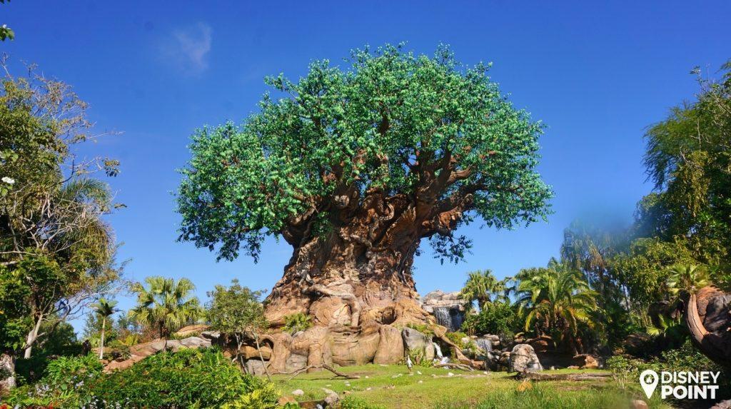 Disney Point Roteiro Grátis Animal Kingdom Arvore da Vida
