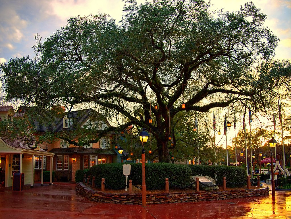 Disney Point Liberty Tree Tavern Árvore