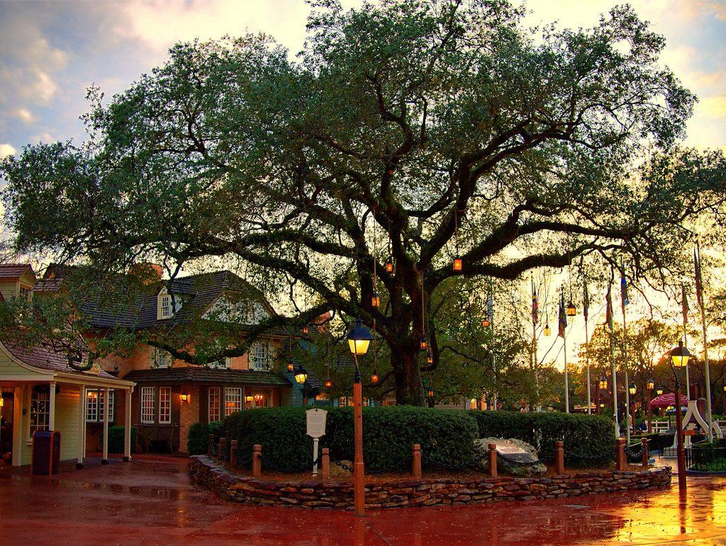 Disney Point Liberty Tree Tavern Árvore